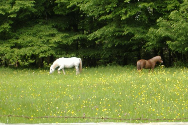 NOISETTE - ONC poney typée shetland née en 2000 - adoptée en juillet 2013 par Patrick  Dscf3737