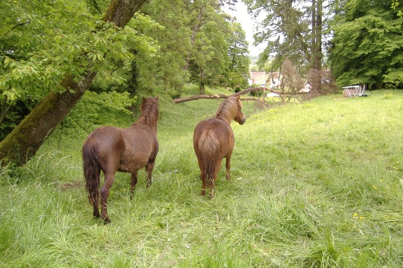 NOISETTE - ONC poney typée shetland née en 2000 - adoptée en juillet 2013 par Patrick  Dscf3740