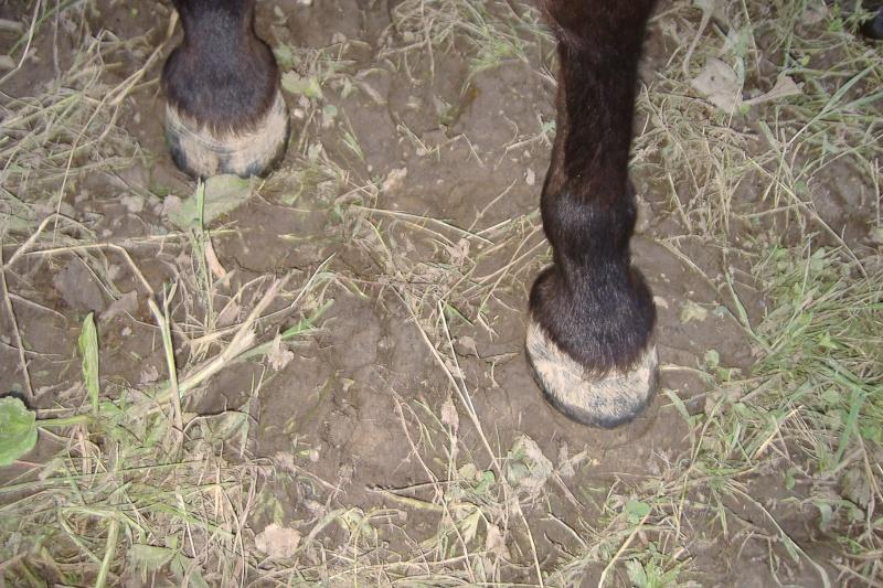 REGLISSE - ONC poney typée Shetland née en 2000 - adoptée en novembre 2013 par Solenn Dscf3757