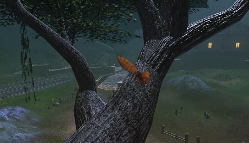 Créature ambiantes  Dragon14