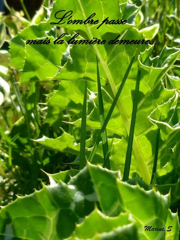 Avatars Couleur Verte 1-469010