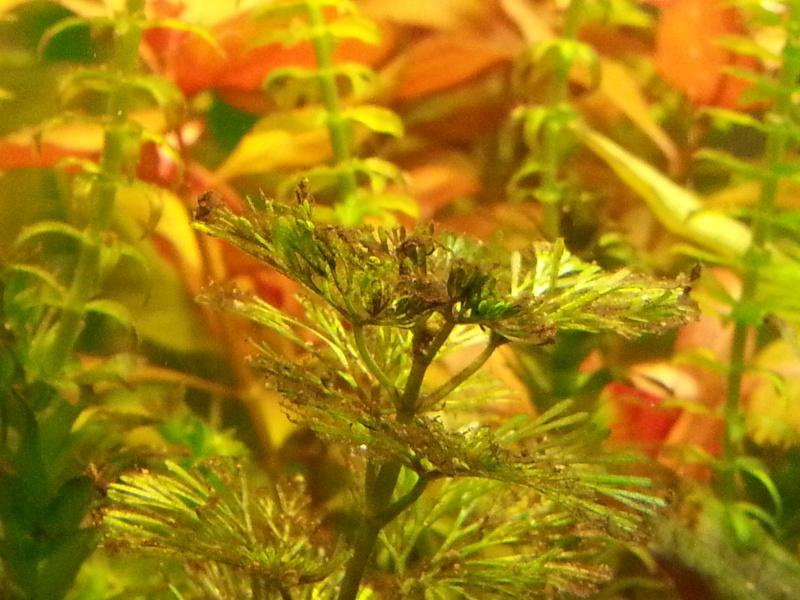 Problèmes d'algues 20130410
