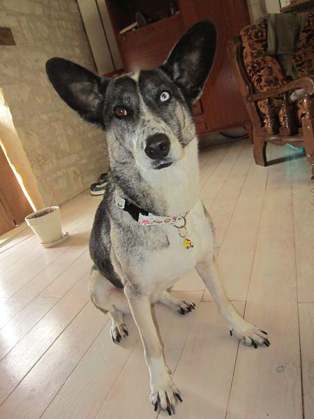 Vends paniers et accessoires pour chiens : bon de reduction Img_3912
