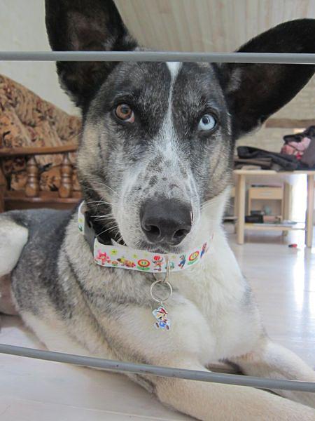 Vends paniers et accessoires pour chiens : bon de reduction Img_4010