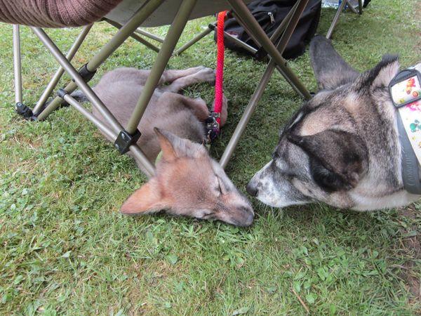 Entre chien et loup ?? Img_4012