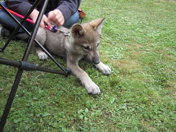 Entre chien et loup ?? Img_4013