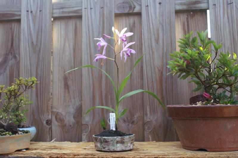 Voici mes plantes d'accompagnements Pict0210