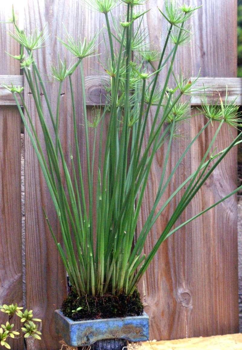 Voici mes plantes d'accompagnements Pict0310
