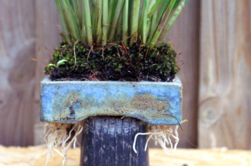 Voici mes plantes d'accompagnements Pict0311
