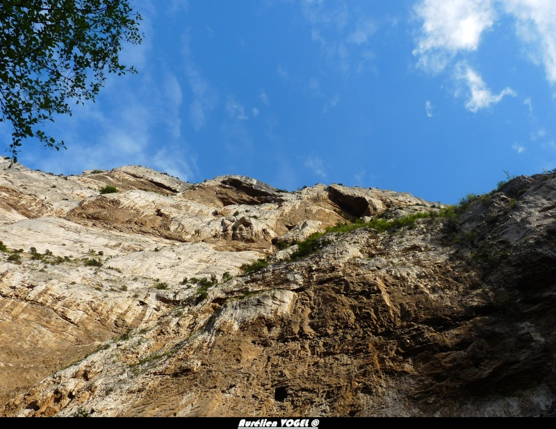 Paysage Vauclusiens P1110613