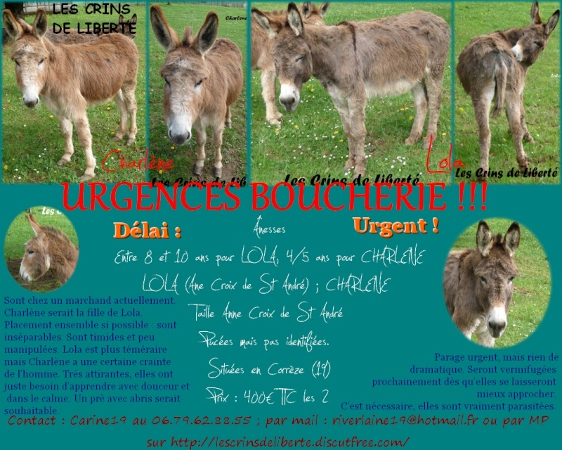 (Dept19) LOLA (dcd) et CHARLENE, ânesses, réservées par Indye !!!! (Juin 2013) Charla11