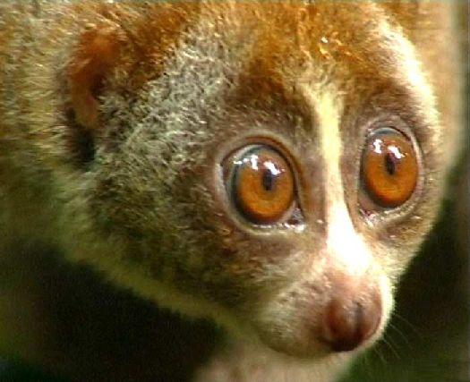 Car-Toonerie - Page 7 Lemuri10