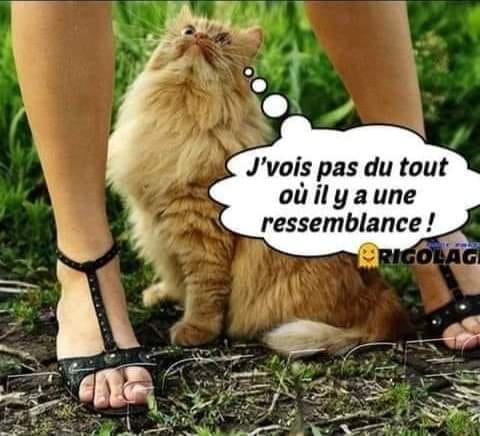 Humour du jour - Page 34 20014910