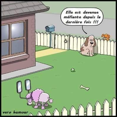 Humour du jour - Page 6 46795310