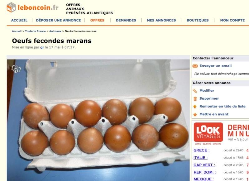 œufs fécondés de Marans… attention à ce que vous trouvez sur lbc Captur10