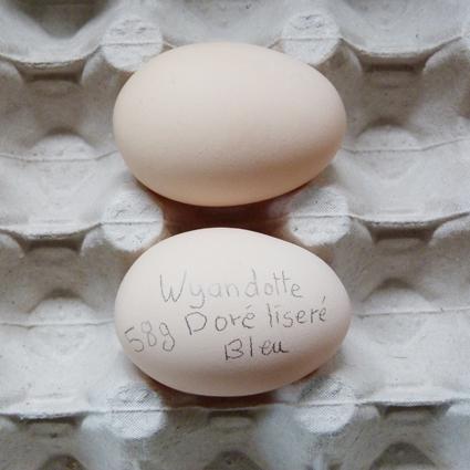 Des œufs normaux ! Owyand11
