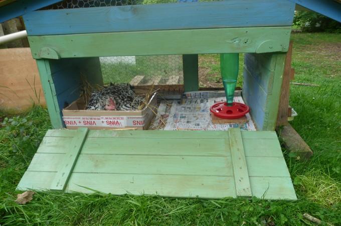 Petits poulaillers mobiles ou nurseries couveuses et poussins P1020610