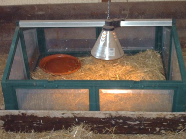 Terrarium hivernal pour tortue adulte  Images13