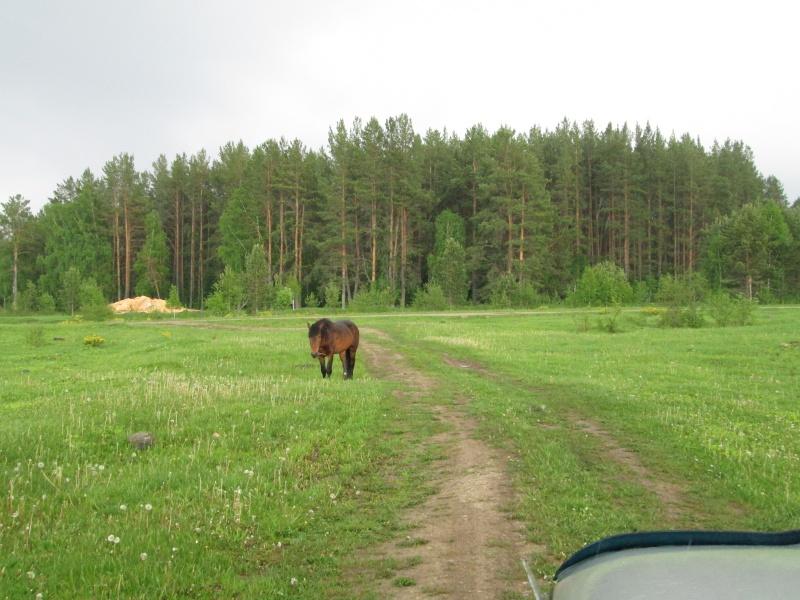 Окрестности деревни Верхний Катав Img_1321