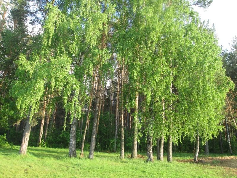 Окрестности деревни Верхний Катав Img_1341