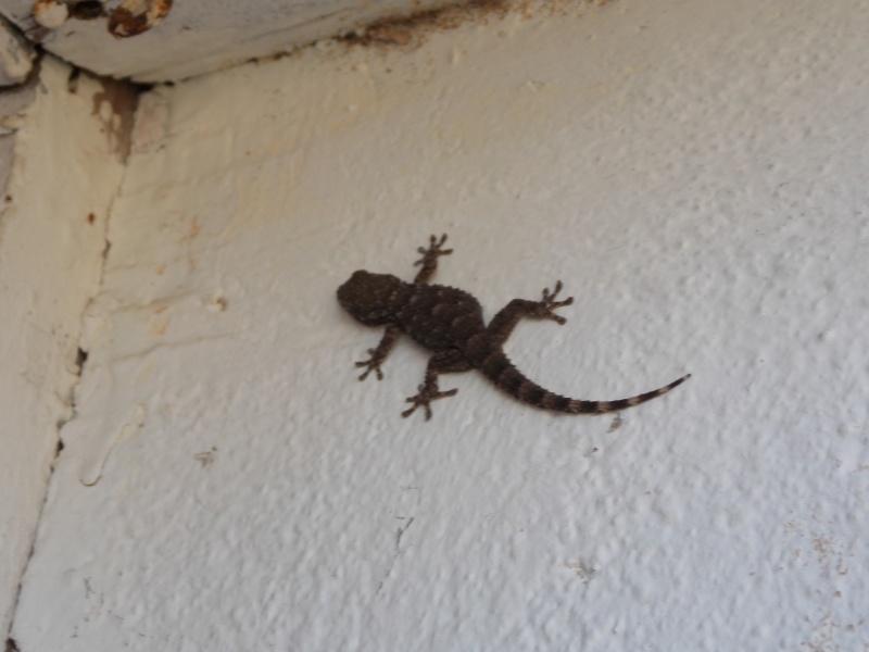 Reptiles de Corse 02410