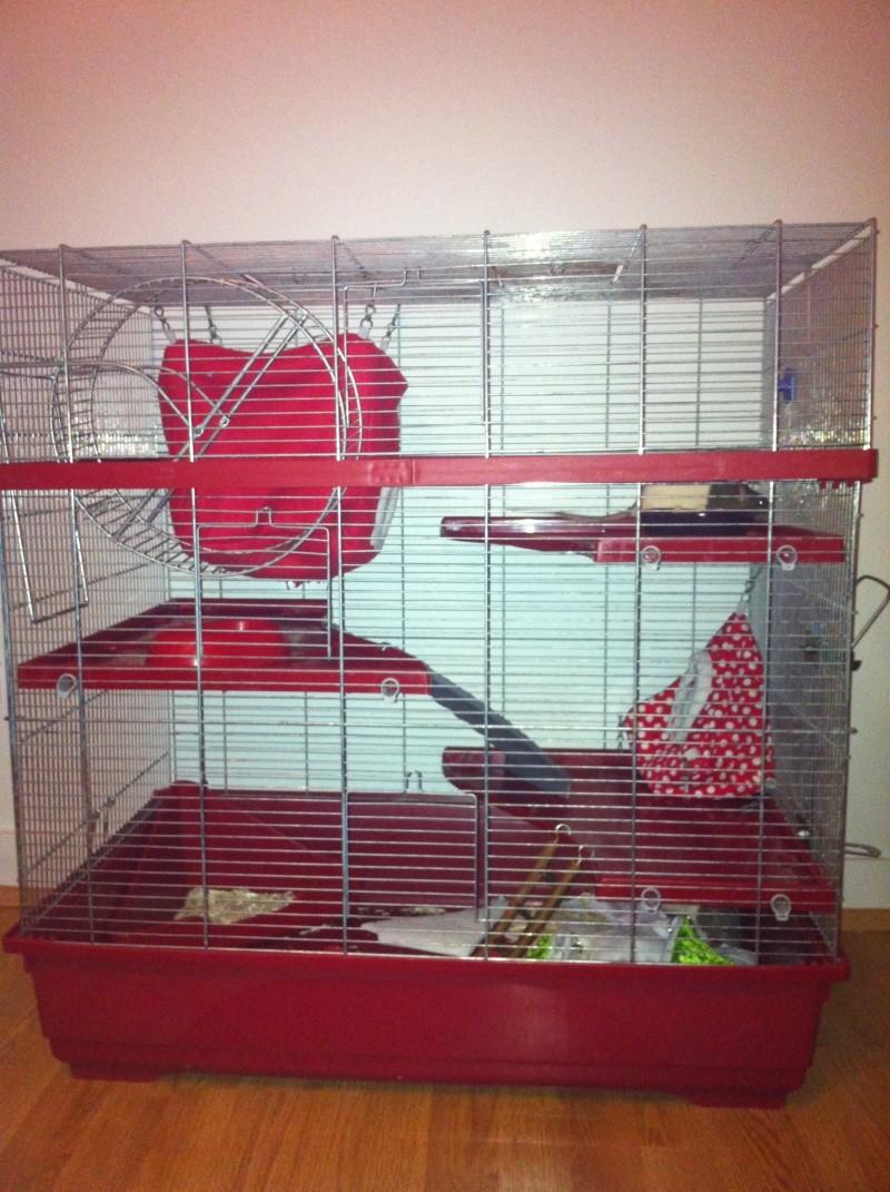 Vends grande cage 80x48x80 Img_3710