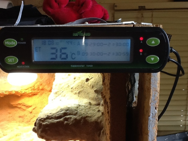 Thermostat reptiland  Image29
