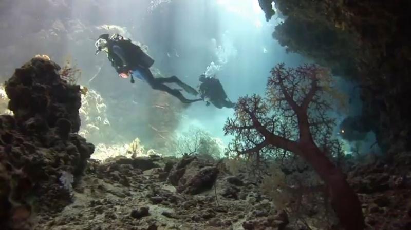 La mer est un grand aquarium... Aquari10