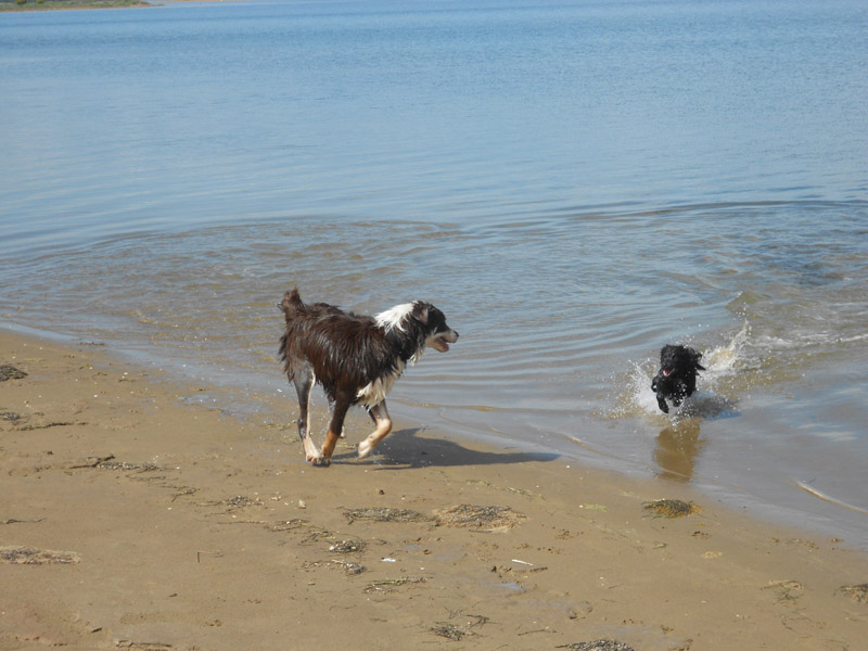 Photo de vos chiens à la plage! Dscn0718