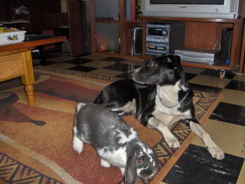 photos de vos chiens et de leurs copains de tous genres  Caline10