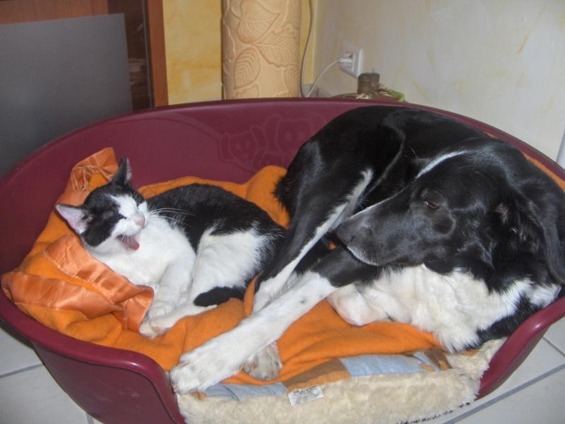 photos de vos chiens et de leurs copains de tous genres  Divers10