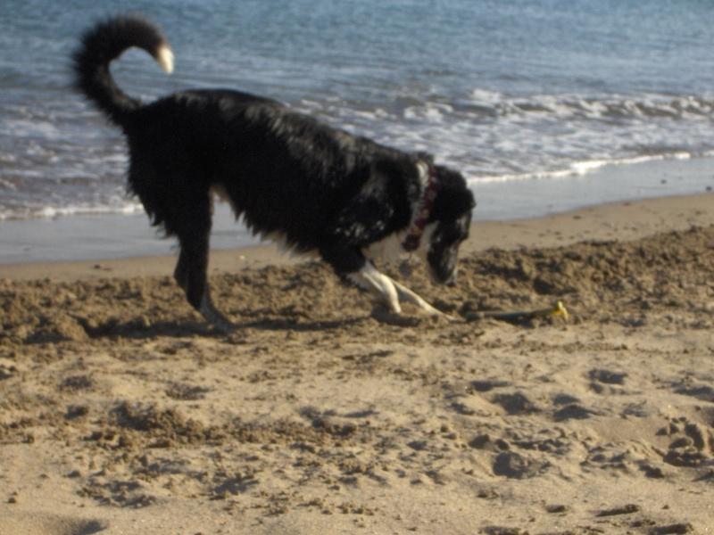 Photo de vos chiens à la plage! Valras11