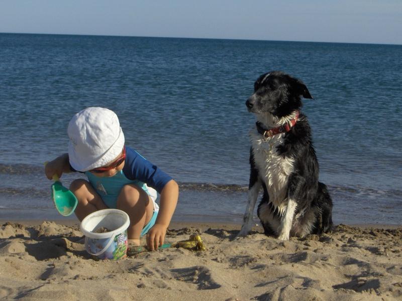 Photo de vos chiens à la plage! Valras12