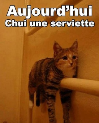 Chat alors! - Page 4 38918410