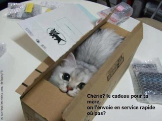 Chat alors! - Page 3 48550310