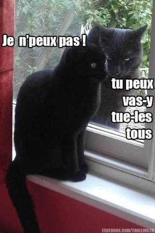 Chat alors! - Page 2 60208210
