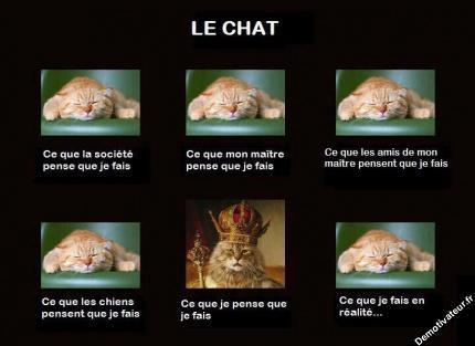 Chat alors! - Page 2 92306111