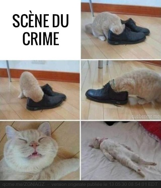 Chat alors! - Page 3 9907_110