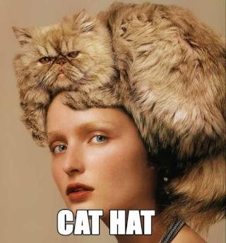 Chat alors! - Page 3 Cat20h10