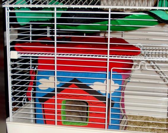 jeu pour enfant furry frenz*, jeu pour rat? Dsc06810