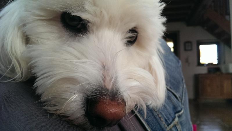 [PARTAGE] ¬Vos plus belles photos prises avec votre HTC One - Page 2 Imag0110