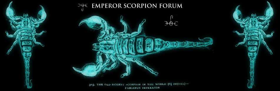 Emperor Scorpion Forum