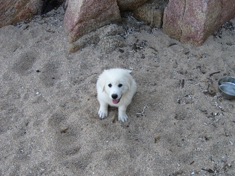 Photo de vos chiens à la plage! 012_210