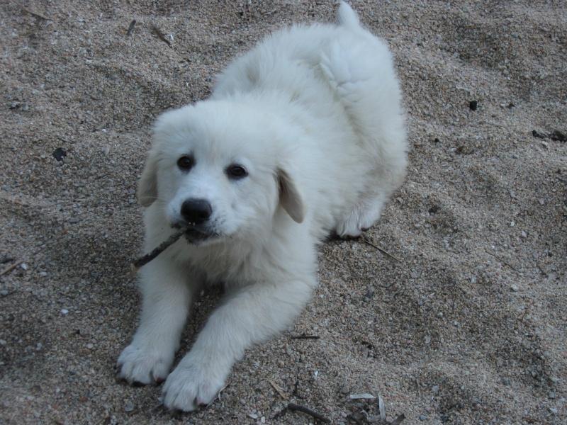 Photo de vos chiens à la plage! 017_310