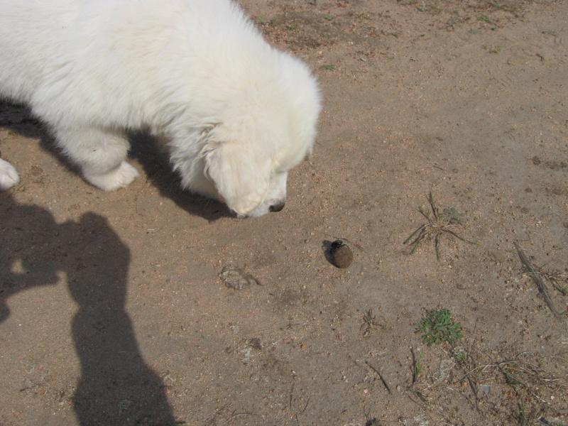 Photo de vos chiens à la plage! 02310