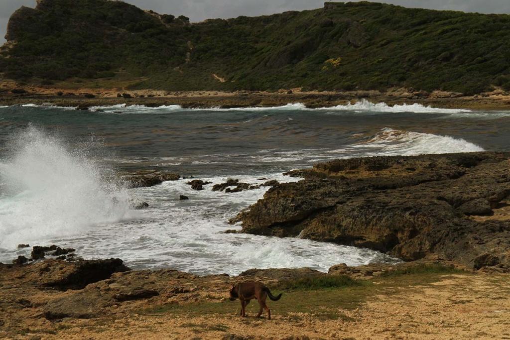 Balade en Guadeloupe Img_7726