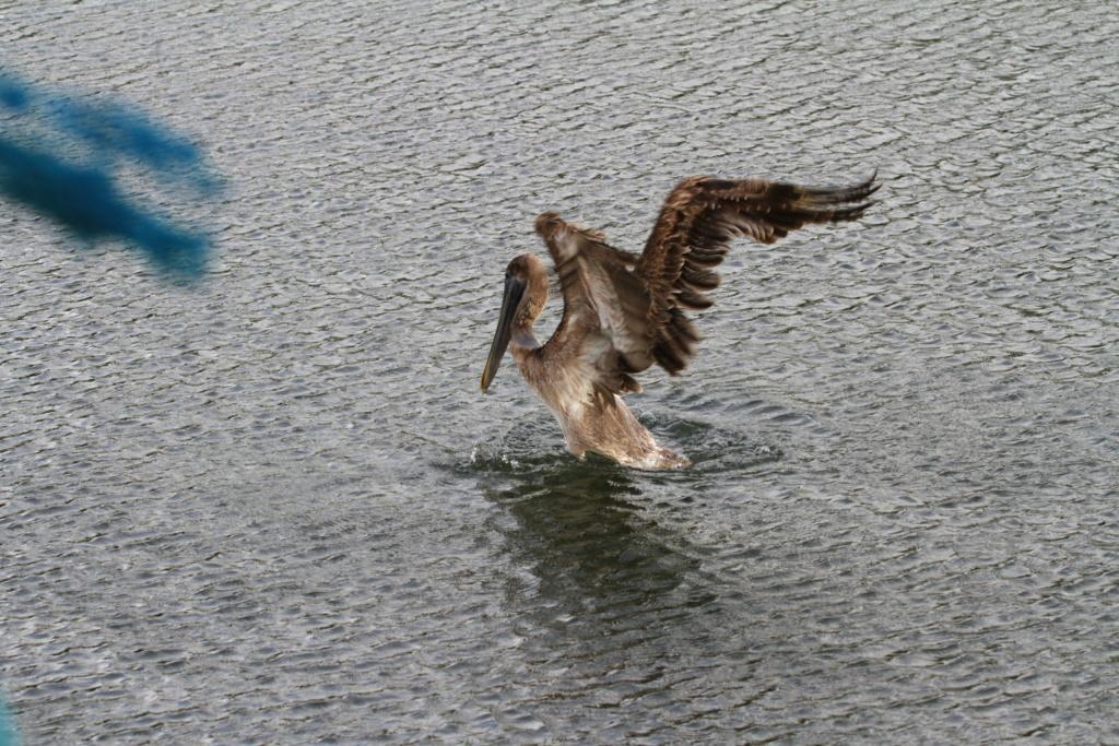 [Ouvert] FIL - Oiseaux. - Page 18 Img_8710