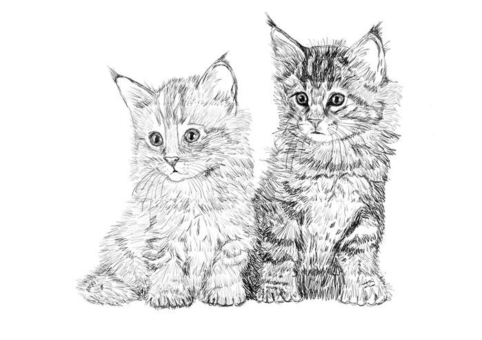 кошки в карандаше 2_ddnd10