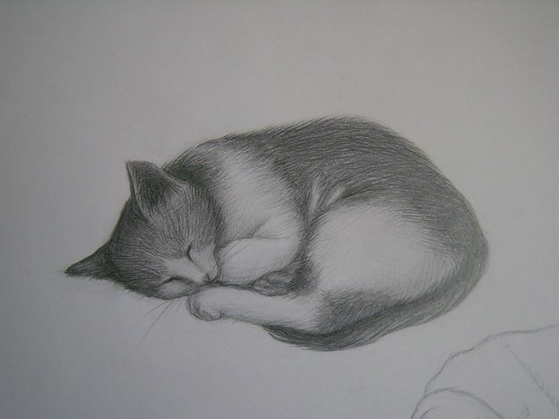 кошки в карандаше Dddddd10
