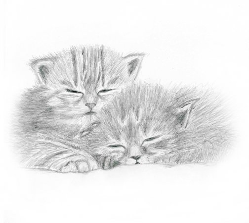кошки в карандаше Ddddnd10